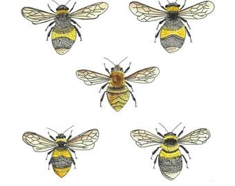 British bees natural history illustration print