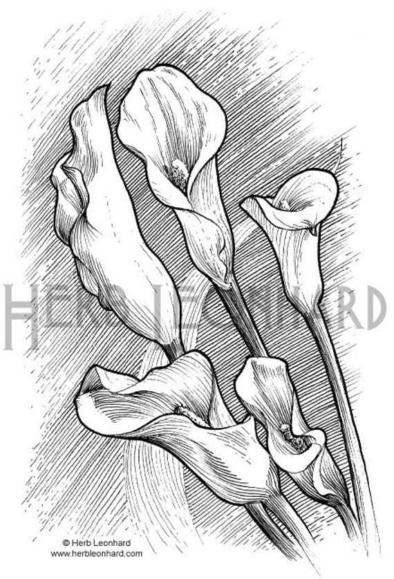 Herb Leonhard Adult Coloring Page Calla Lily And Peace Lily Etsy