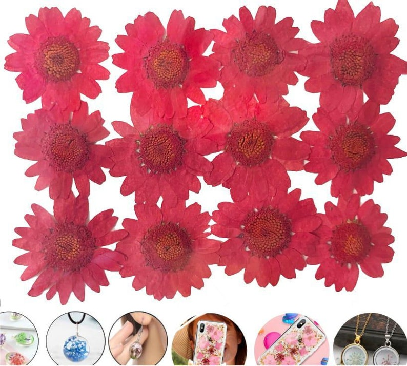 12pcs Red Chrysanthemum Dyed Pressed Dried Flower Dry Plants Epoxy Uv Resin Pendant Necklace Nail Art Jewelry Making Scrapbooking Diy