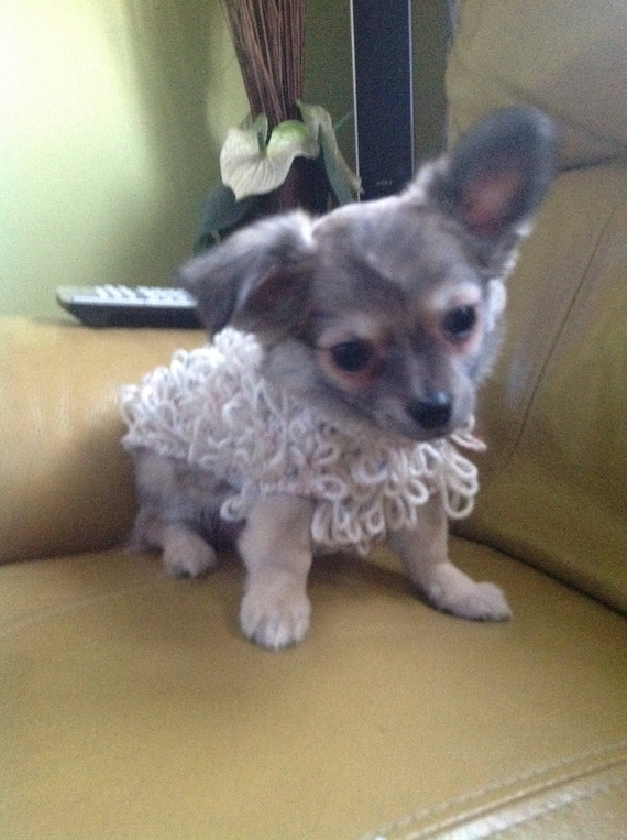Hand Knitted Loopy Pattern Chihuahua Dog Puppy Coat in Cream Aran Wool with  Coloured Flecks to fit a dog with a back length of 8-9inches