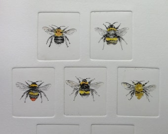 7 bumblebees of the UK plain, etching and hand coloured illustrations of the 7 most common bumblebees. limited edition, hand made print.