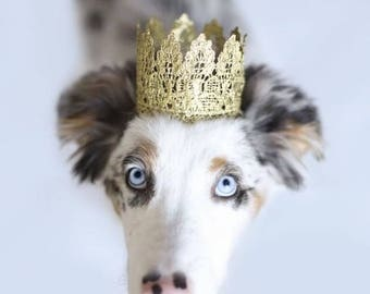 Pet Birthday Crown Gold Lace Crown for Dogs and Cats - Lola Pet Crown - Photo Prop - Birthday Party - Prince Princess Crown - 18K Gold