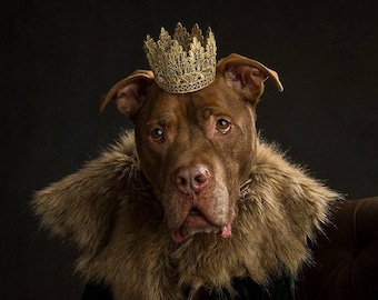 Regal Pet Birthday Crown Gold Lace Crown for Dogs and Cats - Lola Pup Crown - Photo Prop - Birthday Party - Prince Princess Crown - 18K Gold