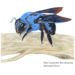 ACEO Artwork Watercolor entomology biology nature carpenter bee Original Painting bees Blue bee small art bee Painting