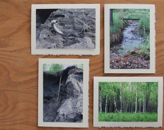 Alaska Wilderness cards arctic grove, mammoth tusk, hanging birch tree,  and creek crossing
