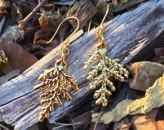 24K Gold Electroplated Real Evergreen Tree Earrings on Gold Vermeil Cluster Ear Wires