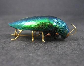 Vintage Victorian Revival Jewel Beetle Brooch Metallic Wood Bug Buprestidae