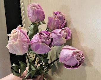 Dried Roses, Roses, dried roses, Lilac dried roses