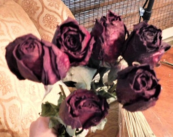 Dried Roses, Roses, Burgundy dried roses,