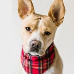 Flannel Pet Bandana or Bow Tie