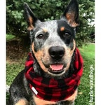 Flannel Infinity Dog Scarf