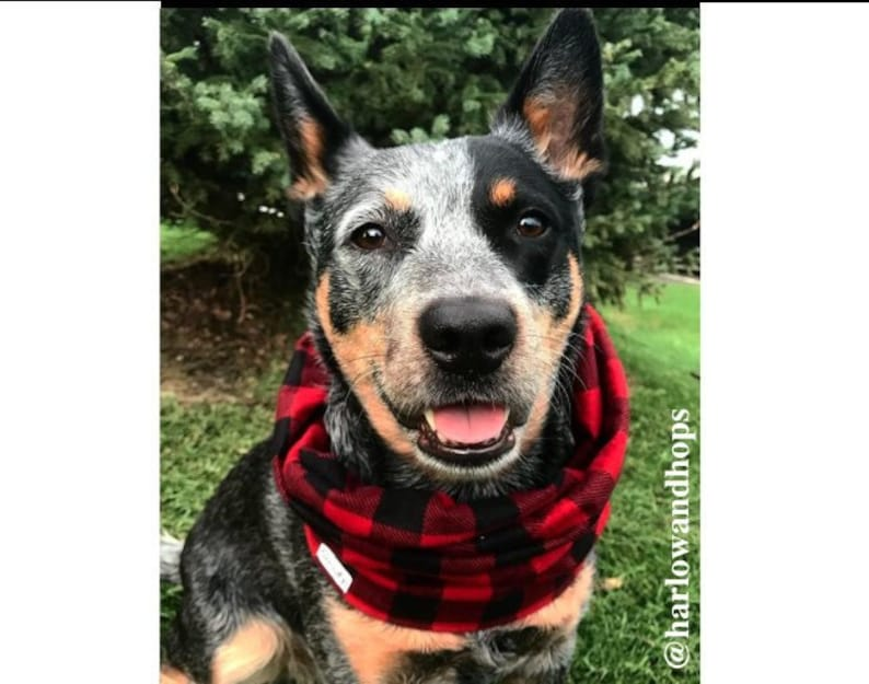 Flannel Infinity Dog Scarf image 0