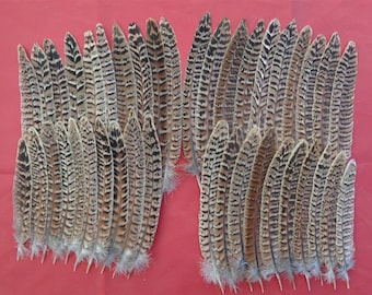 """40 Small Hen Pheasant Tail Feathers 5"""" - 7.5"""""""