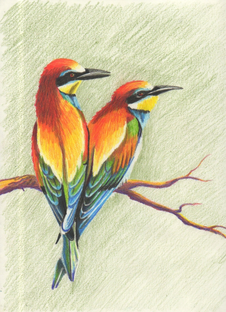 Colorful birds colored pencil drawing