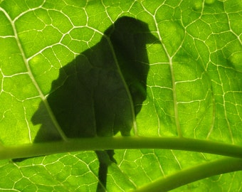 Bird Print - Fine Art Photography - Bird Silhouette - Bird Photo - Nature Photography
