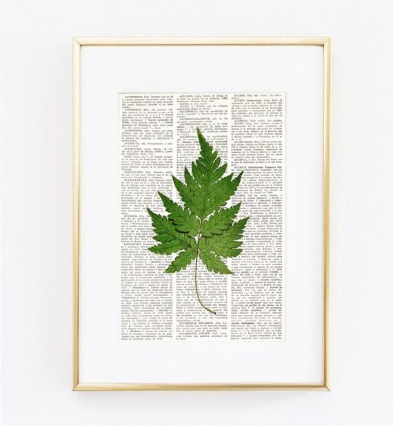 HELECHO sobre página diccionario lámina helecho Láminas