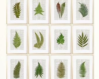 FERNS Dictionary Art Print Set, Botanical Prints, Fern Print, Fern Art, Fern Botanical Print, Vintage Botanical Wall Decor, Set Prints, #193