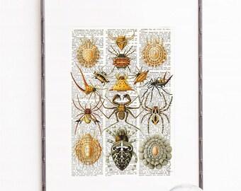 Spiders Arachnid Arachnida Haeckel Print Vintage Natural