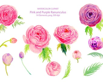 Wedding Clipart - Watercolor pink and purple ranunculus printable instant download