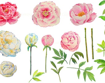 Wedding clipart - watercolor peony pink and yellow printable instant download scrapbook  for greeting cards wedding invitations