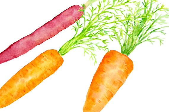 Vegetables clipart Hand painted clipart Carrots clipart Watercolor carrot clipart. Vegetables Watercolor clipart