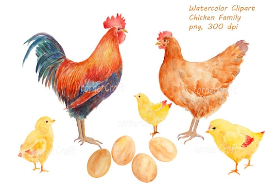 Watercolor Clipart Hand Drawn Chicken Family Rooster Hen Etsy