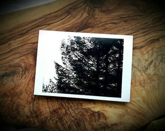 Pine Forest Art Photographic Cards - Winter Twilight Woodland Photograph Greeting Card - Made to order