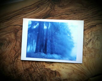 Blue Pine Trees Forest Art Photographic Cards - Winter Twilight Snow Woodland Photograph Greeting Christmas Card - Made to order