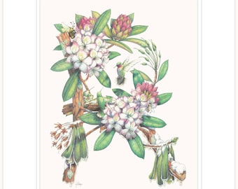 """Rhododendron - Forest Debutante, botanical illustration fine print 16"""" x 20"""" with mat and backing"""