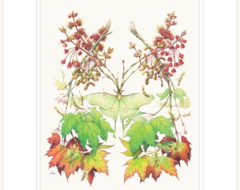 """Maple - The Weaver botanical illustration fine print 11"""" x 14"""" with mat and backing"""