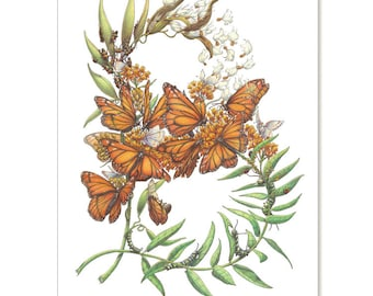 """Butterflyweed - Monarch's Host, botanical illustration greeting card 5"""" x 7"""" SET OF SIX"""