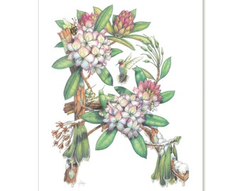 """Rhododendron - Forest Debutante, botanical illustration greeting card 5"""" x 7"""" SET OF SIX"""