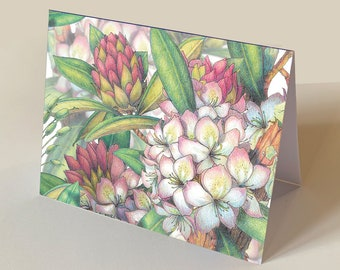 """Rhododendron set of 12 botanical illustration greeting cards 5.5"""" x 4.25"""""""