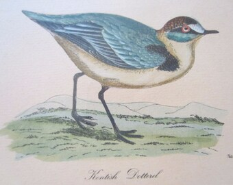 Bird print antique Australian Golden Plover and Asiatic Dottrel Broinowski Birds of Australia art picture chromolithograph print 1889