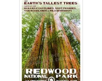 """Redwood National Park Poster, WPA style 13"""" x 19"""" Signed by the artist. FREE SHIPPING!"""