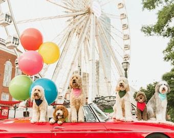 Jumbo Balloons, Round Balloons, Huge Balloon, Giant Balloon, Large Balloon, 36 Inch Balloon, Wedding Photo Prop, Engagement Photo,Photo Prop