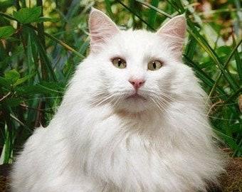 White norwegian forest cat cross stitch pattern, white cat pattern, NFC cross stitch, counted cross stitch, pdf pattern, modern cross stitch