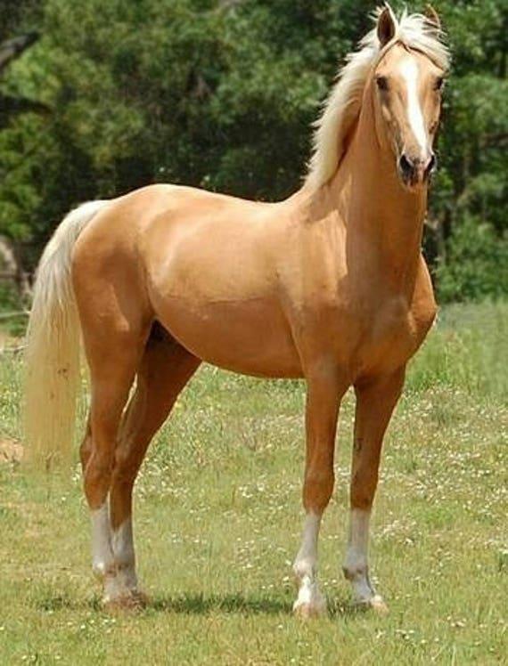 HORSE PAIR # 2 CROSS STITCH CHART