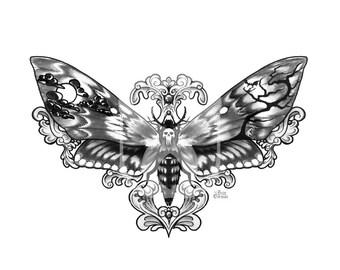 Death's Head Moth Print