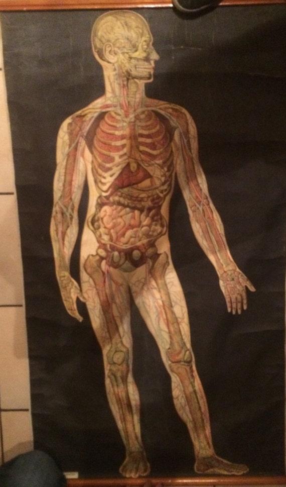 Medizinischen Diagramm der menschlichen Skelett innere Organe | Etsy