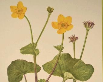 Marsh Marigold Flower Print Yellow Flower Wall Art Print
