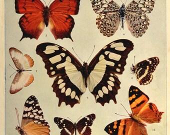 Butterfly Wall Decor Butterfly Art Print Butterflies Antique