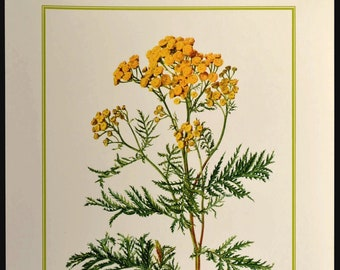 Yellow Wild Flower Wall Decor Nature Print Botanical Art