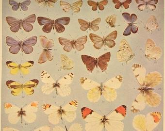 Butterfly Wall Art Butterfly Print Butterflies Antique
