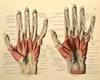 Human Hand Wall Art Print Medical Wall Decor Anatomy Hand