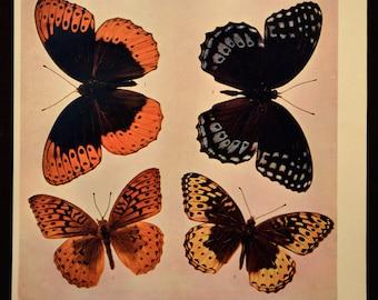 Butterfly Wall Decor Art Butterfly Print Butterflies Antique