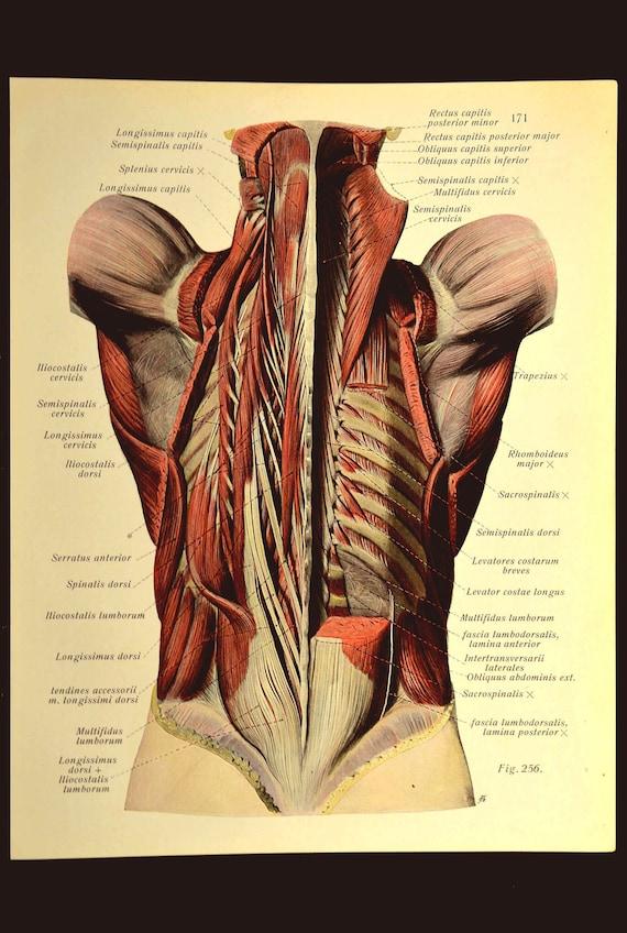 Medical Wall Art Print Human Anatomy Body Wall Decor Torso Etsy