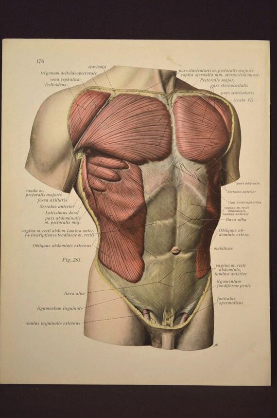 Anatomy Print Human Body Wall Art Medical Wall Decor Torso Etsy