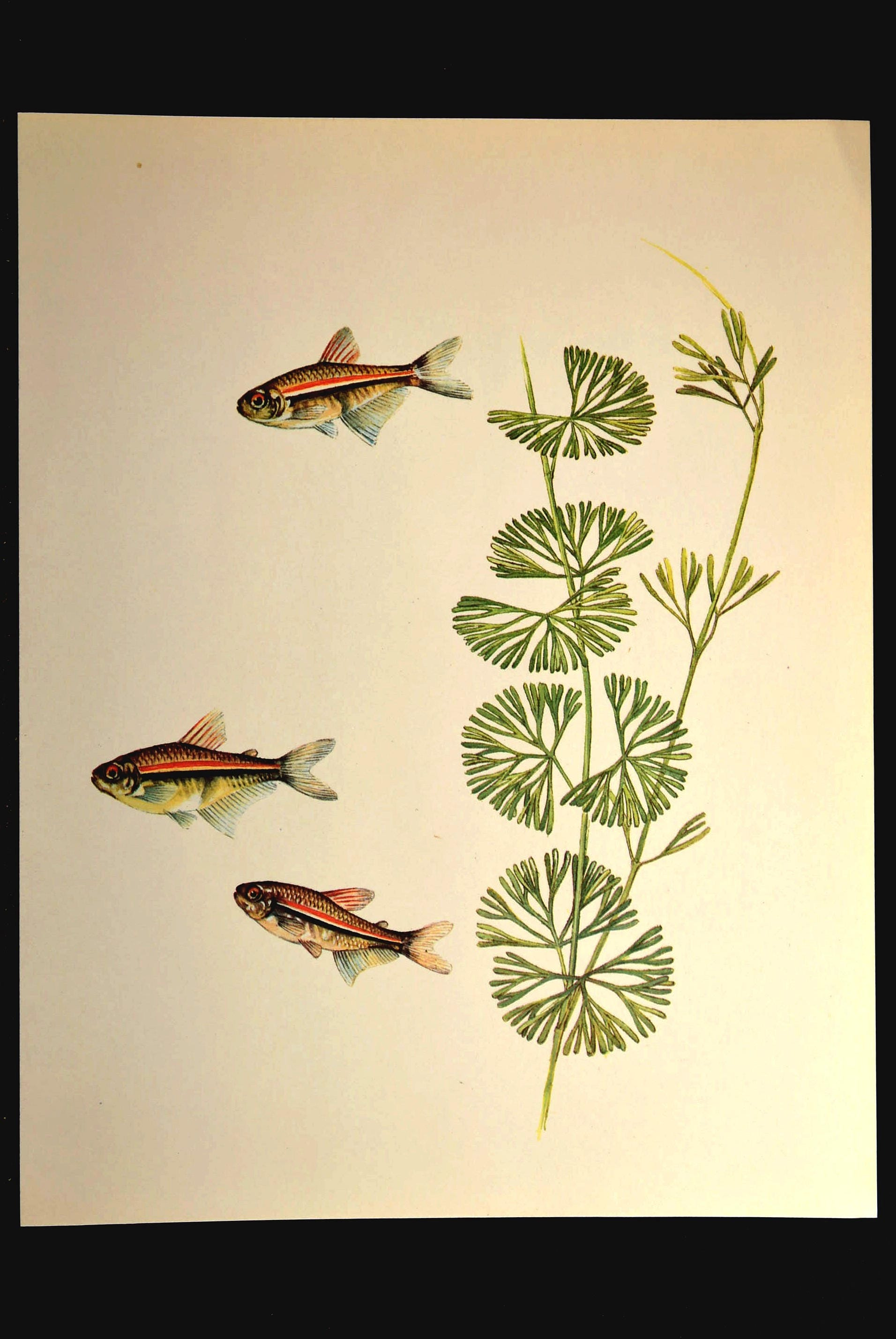 Fine Living Wall Art Aquarium Elaboration - Wall Art Collections ...
