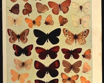 Butterfly Print Butterflies Antique Original Wall Decor Art
